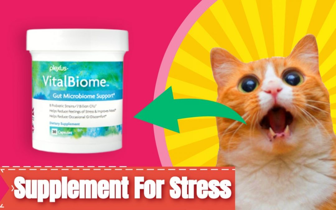 Vitalbiome: A Supplement For Stress
